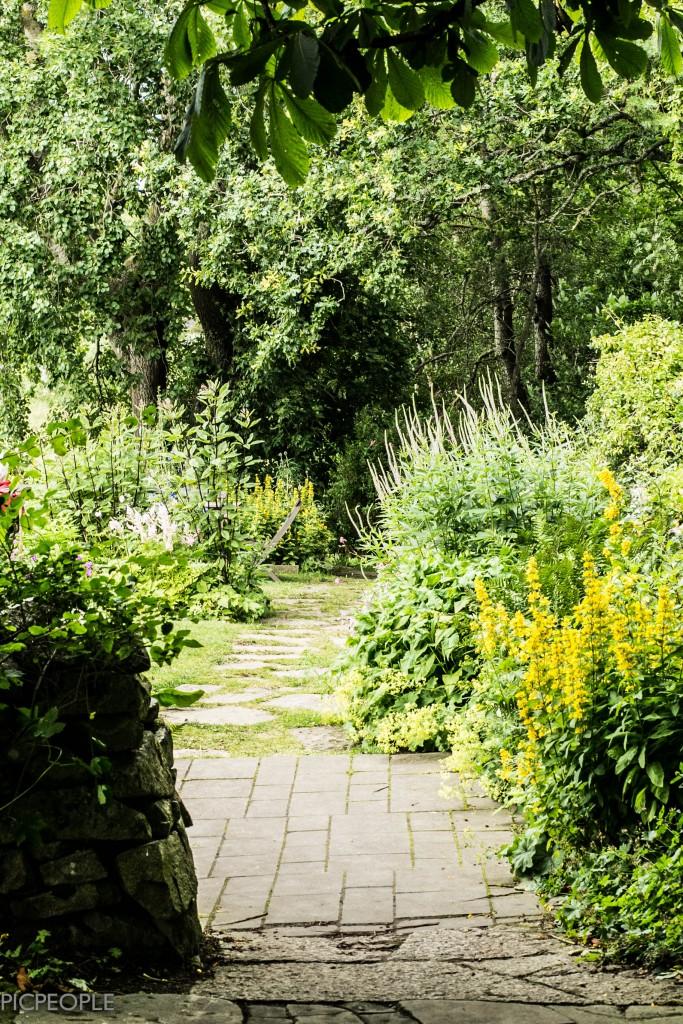 Ljuvlig trädgård.
