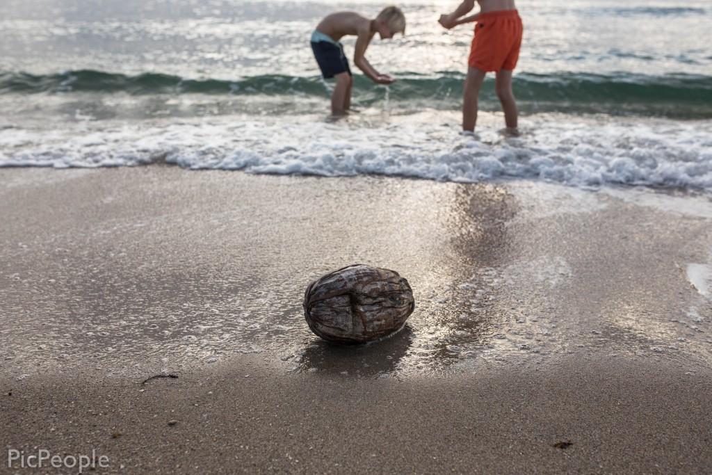 Vi badar på stranden med en kokosnöt och det var härligt.