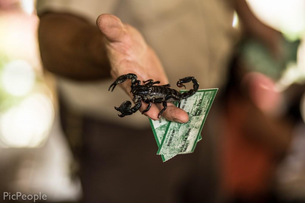 Detta är en skorpion som heter Sally man fick ge biljetterna till.